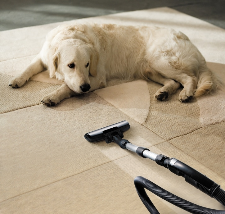 Pet Odor cleaning